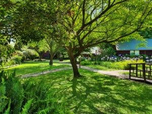 Tsitsikamma Lodge & Spa - Tree-grass