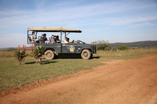 Mansfield Game Reserve - Game 03