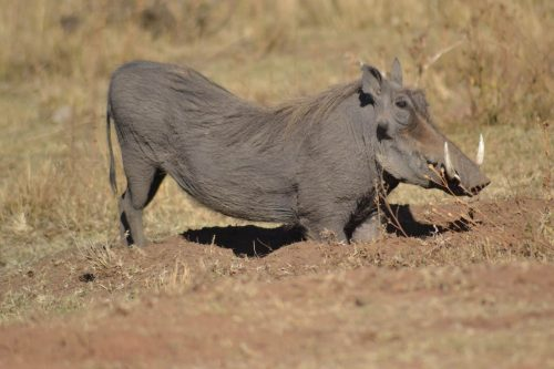 matingwe-lodge - animal-01