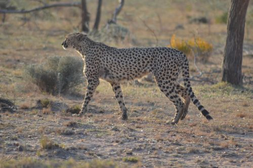 matingwe-lodge - animal-02