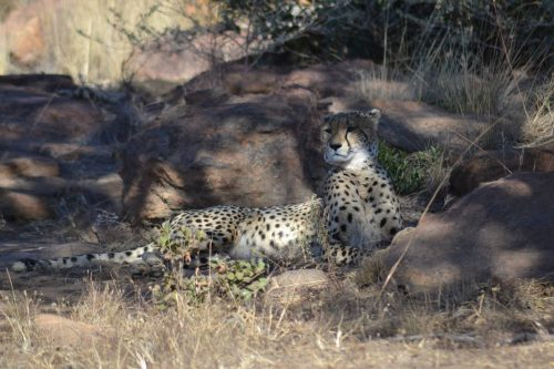 matingwe-lodge - animal-03
