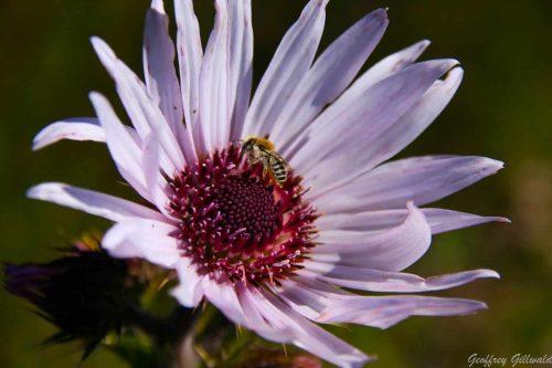 tenahead-flower-01