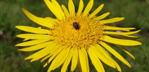tenahead-flower-04