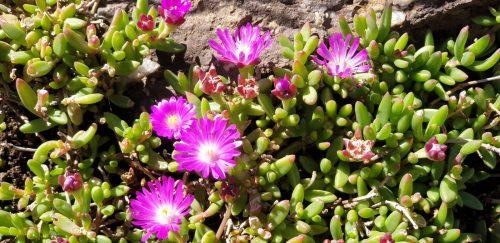 tenahead-flower-05
